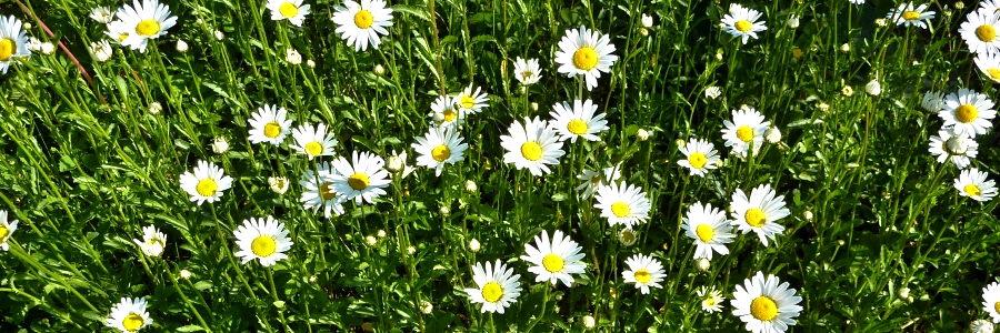 Květnové svátky v Beskydech (4 noci)